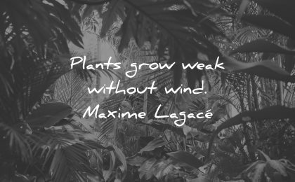 adversity quotes plants grow weak without wind maxime lagace wisdom