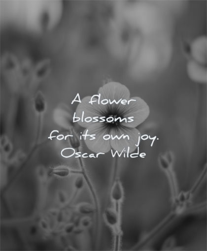 beautiful quotes flower blossoms own joy oscar wilde wisdom