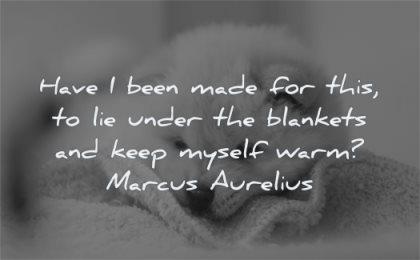 marcus aurelius quotes have been made lie under blankets keep myself warm wisdom dog