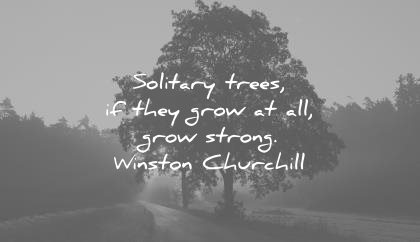 solitude quotes solitary trees they all grow strong winston churchill wisdom